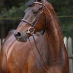 Konie3 150x150 - Konie