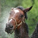 Konie4 150x150 - Konie