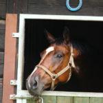 Konie6 150x150 - Konie