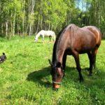 Konie8 150x150 - Konie