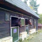 Konie9 150x150 - Konie