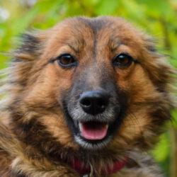 PSX 20201008 143642 250x250 - Dzień za dniem, pies za psem