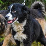 PSX 20201122 201715 160x160 - ASLAN - jeden znajpiękniejszych naszych psów.