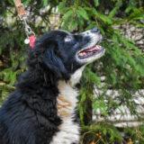 PSX 20201122 201743 160x160 - ASLAN - jeden znajpiękniejszych naszych psów.