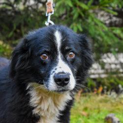 PSX 20201122 202057 250x250 - ASLAN - jeden z najpiękniejszych naszych psów.