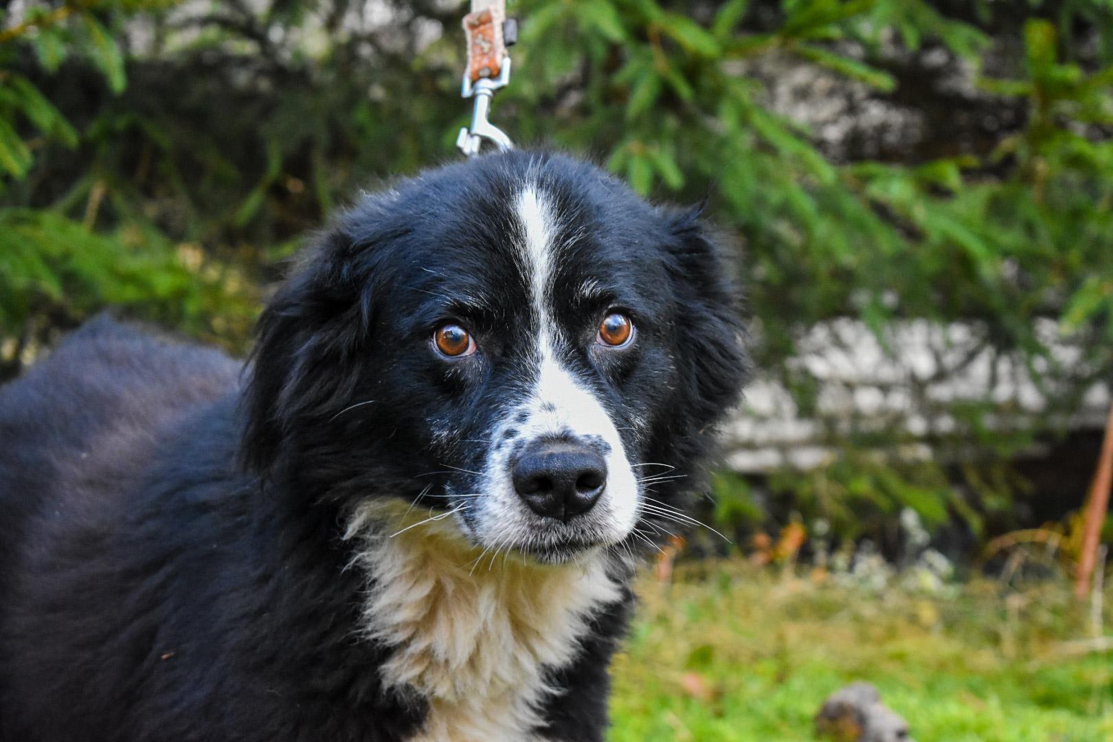 PSX 20201122 202057 - ASLAN - jeden z najpiękniejszych naszych psów.