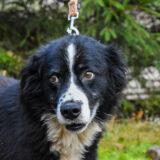 PSX 20201122 202141 160x160 - ASLAN - jeden znajpiękniejszych naszych psów.