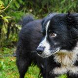PSX 20201122 202321 160x160 - ASLAN - jeden znajpiękniejszych naszych psów.