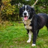 PSX 20201122 202517 160x160 - ASLAN - jeden znajpiękniejszych naszych psów.