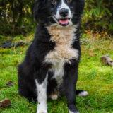 PSX 20201122 202802 160x160 - ASLAN - jeden znajpiękniejszych naszych psów.