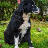 PSX 20201122 203150 160x160 - ASLAN - jeden znajpiękniejszych naszych psów.