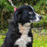 PSX 20201122 203223 160x160 - ASLAN - jeden znajpiękniejszych naszych psów.