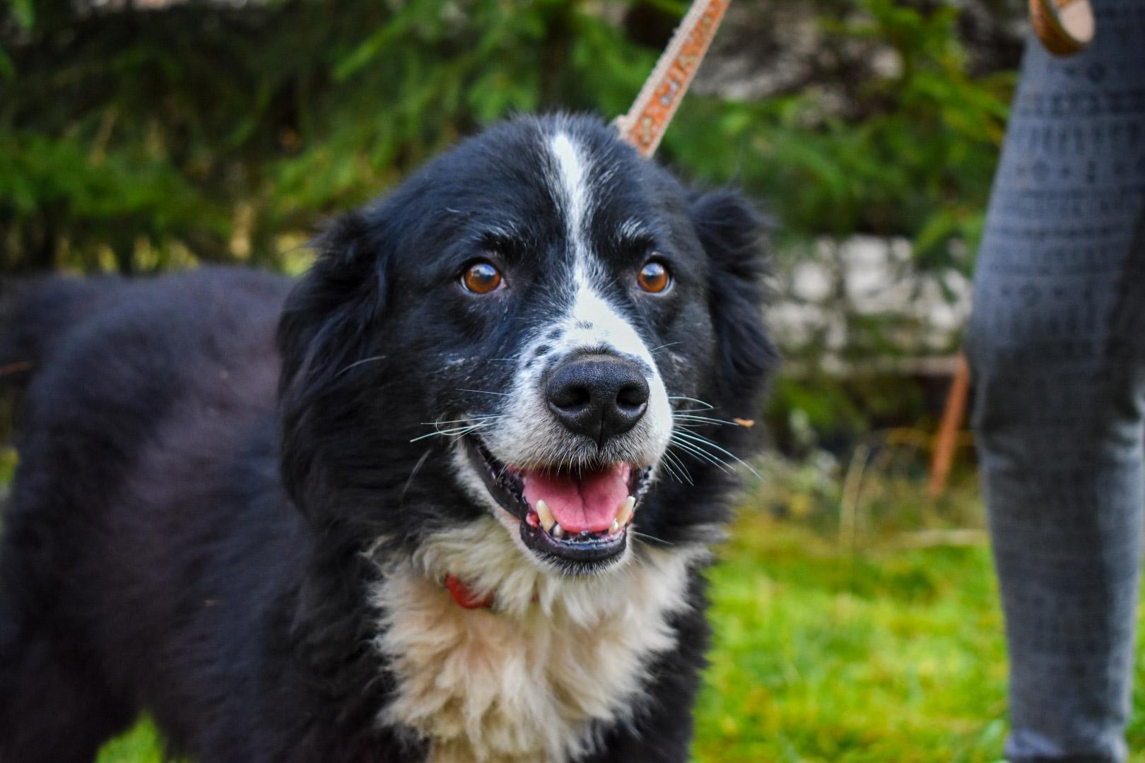 PSX 20201122 203333 - ASLAN - jeden znajpiękniejszych naszych psów.