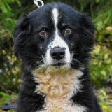 PSX 20201122 203425 1 160x160 - ASLAN - jeden znajpiękniejszych naszych psów.
