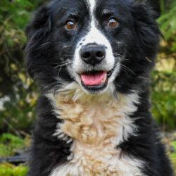 PSX 20201122 203442 250x250 - Dlaczego warto adoptować psa?